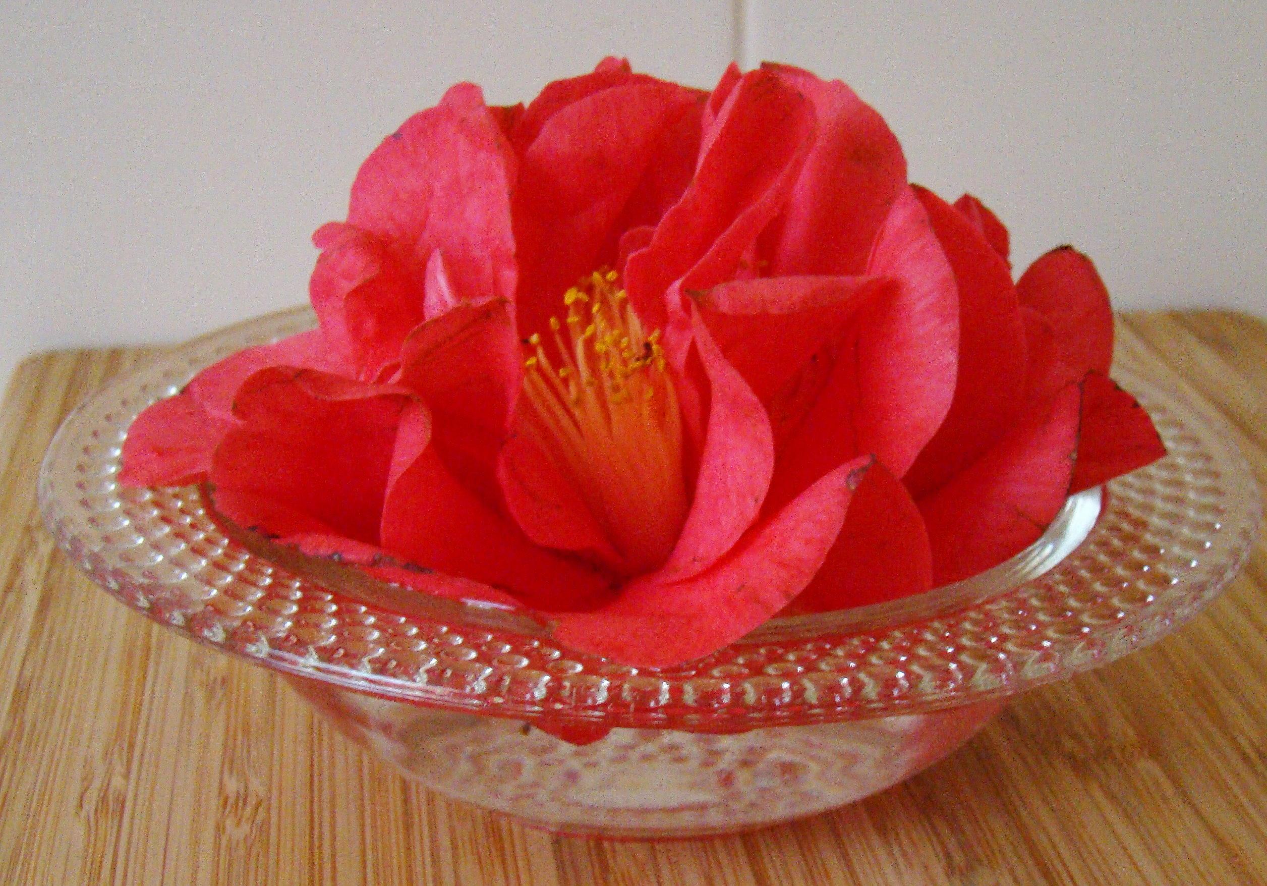 Bev's Camellias h